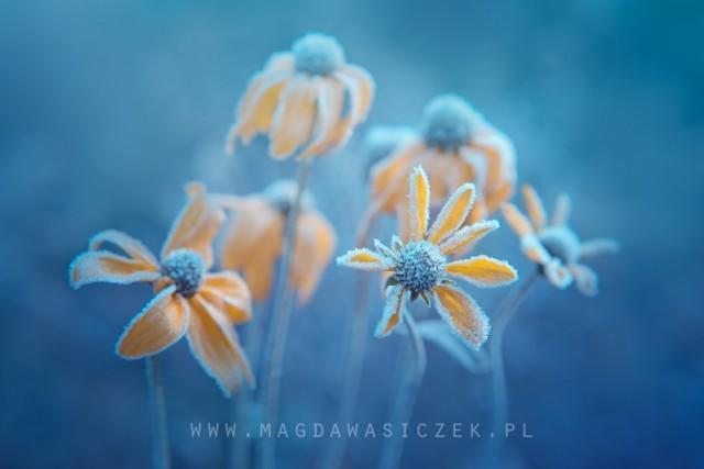 fot. Magda Wasiczek